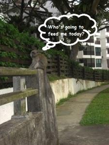 Singapore Wildlife Bukit Timah Reserve